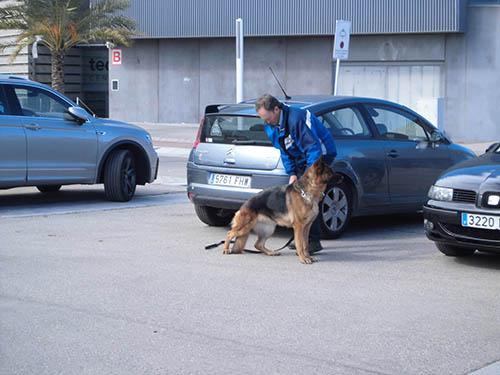 campeonato pastor aleman,reus,cachorros,comprar cachorros,